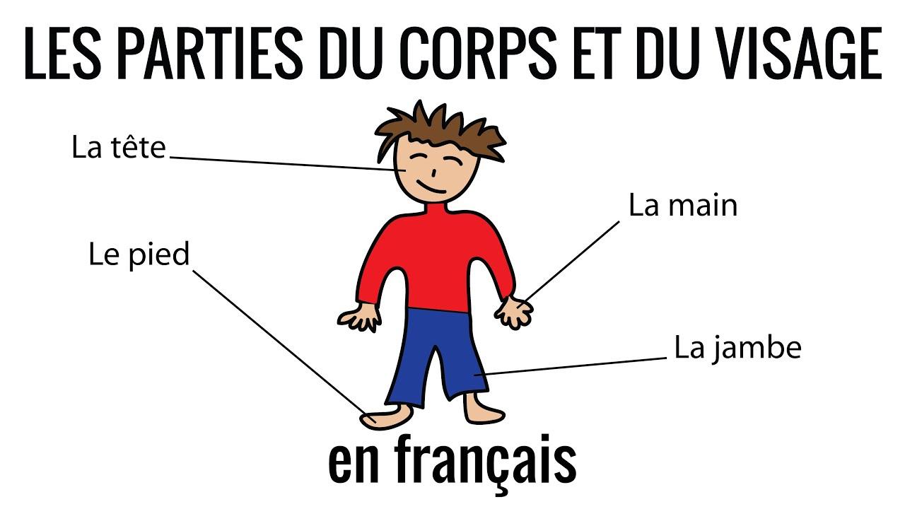 Les Parties Du Corps Et Du Visage En Français encequiconcerne Apprendre Les Parties Du Visage