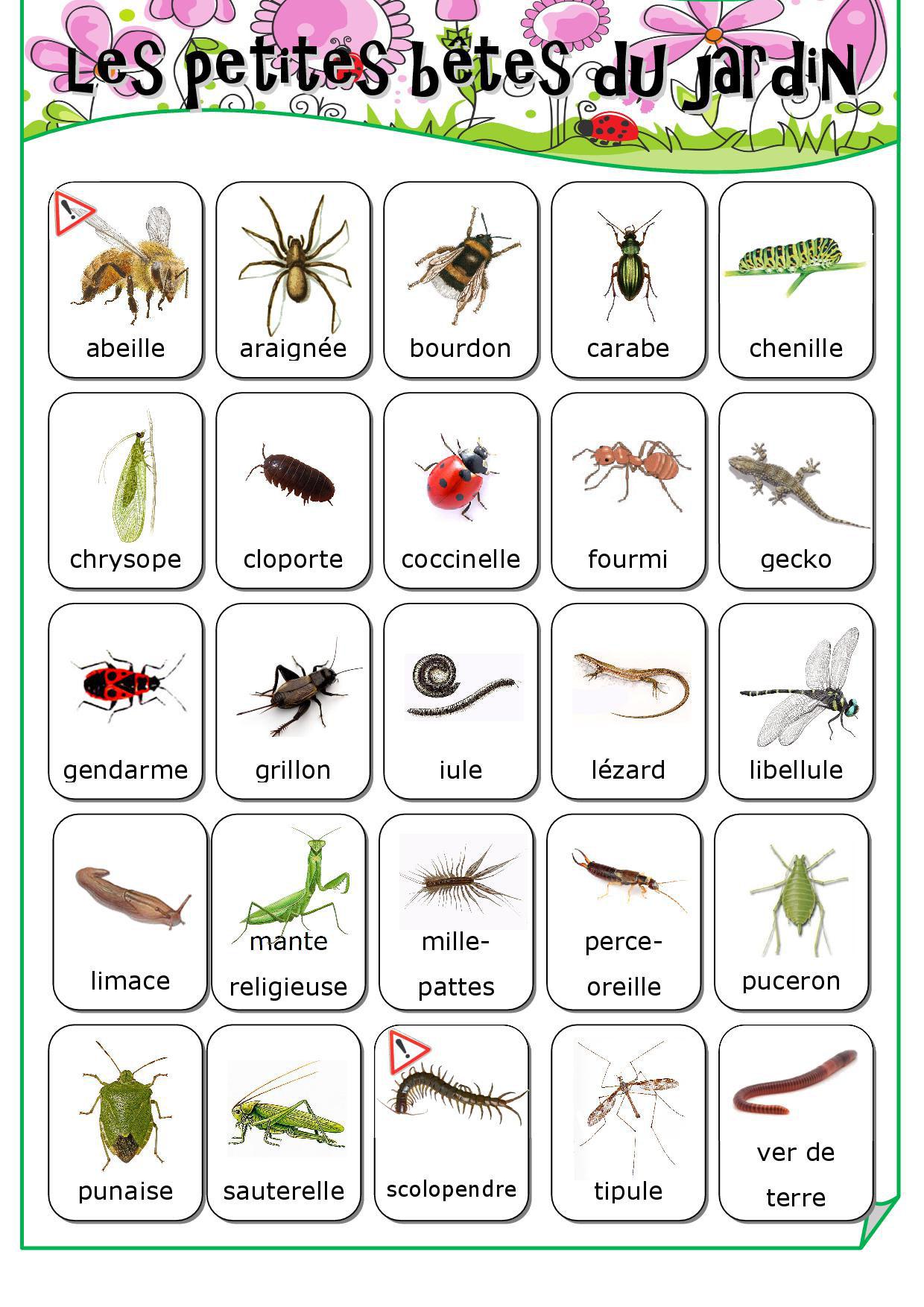 Les Petites Bêtes Du Jardin - Fiches De Préparations (Cycle1 intérieur Imagier Insectes