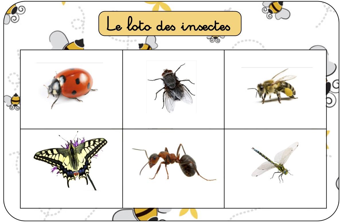 Les Petits Jeux De July: Les Insectes avec Imagier Insectes