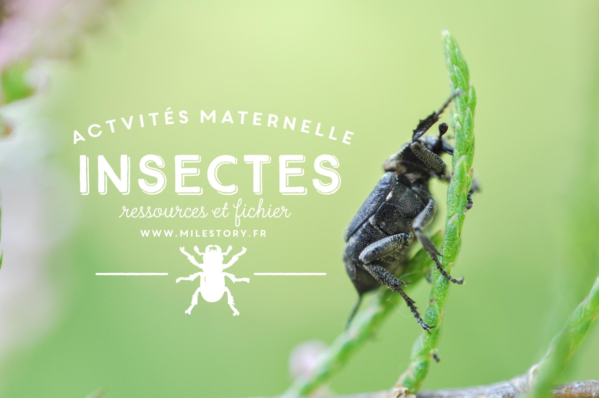 Livres Et Activités Sur Les Insectes (Et Autres Petites intérieur Imagier Insectes