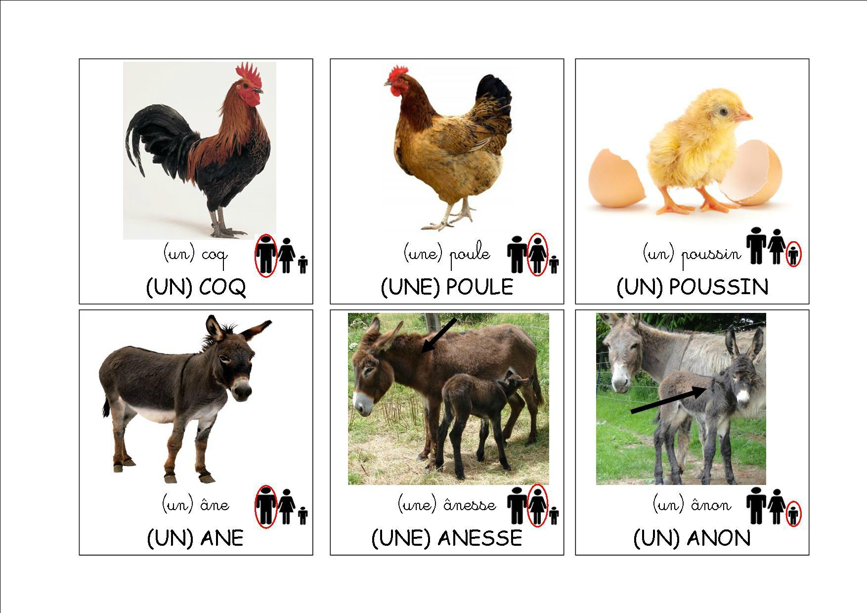 Loto Des Animaux De La Ferme - La Classe De Mamaicress tout Imagier Animaux De La Ferme