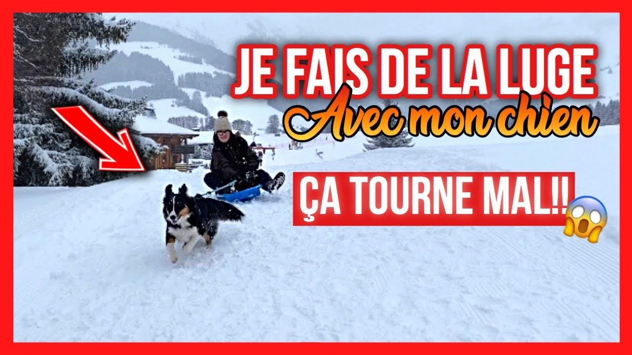 Luge Avec Mon Chien 🐶 Ça Tourne Mal!!😱 + Vacances À La Montagne tout Chien Qui Fait De La Luge