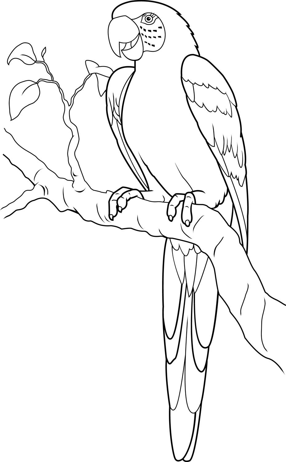 Macaw - Google Search | Dessin Perroquet, Coloriage tout Perroquet Coloriage A Imprimer