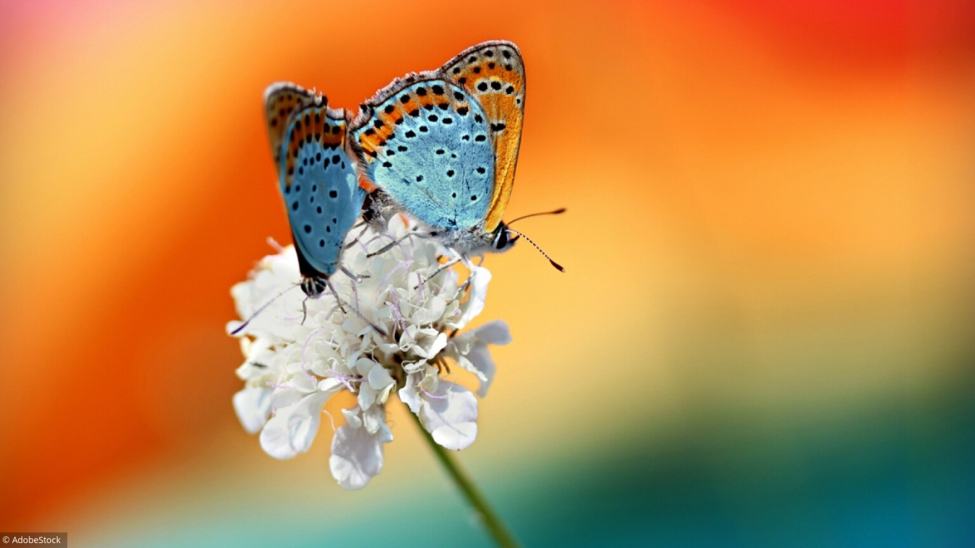 Memory : Une Envolée De Papillons ! encequiconcerne Jeux Papillon Gratuits Ligne