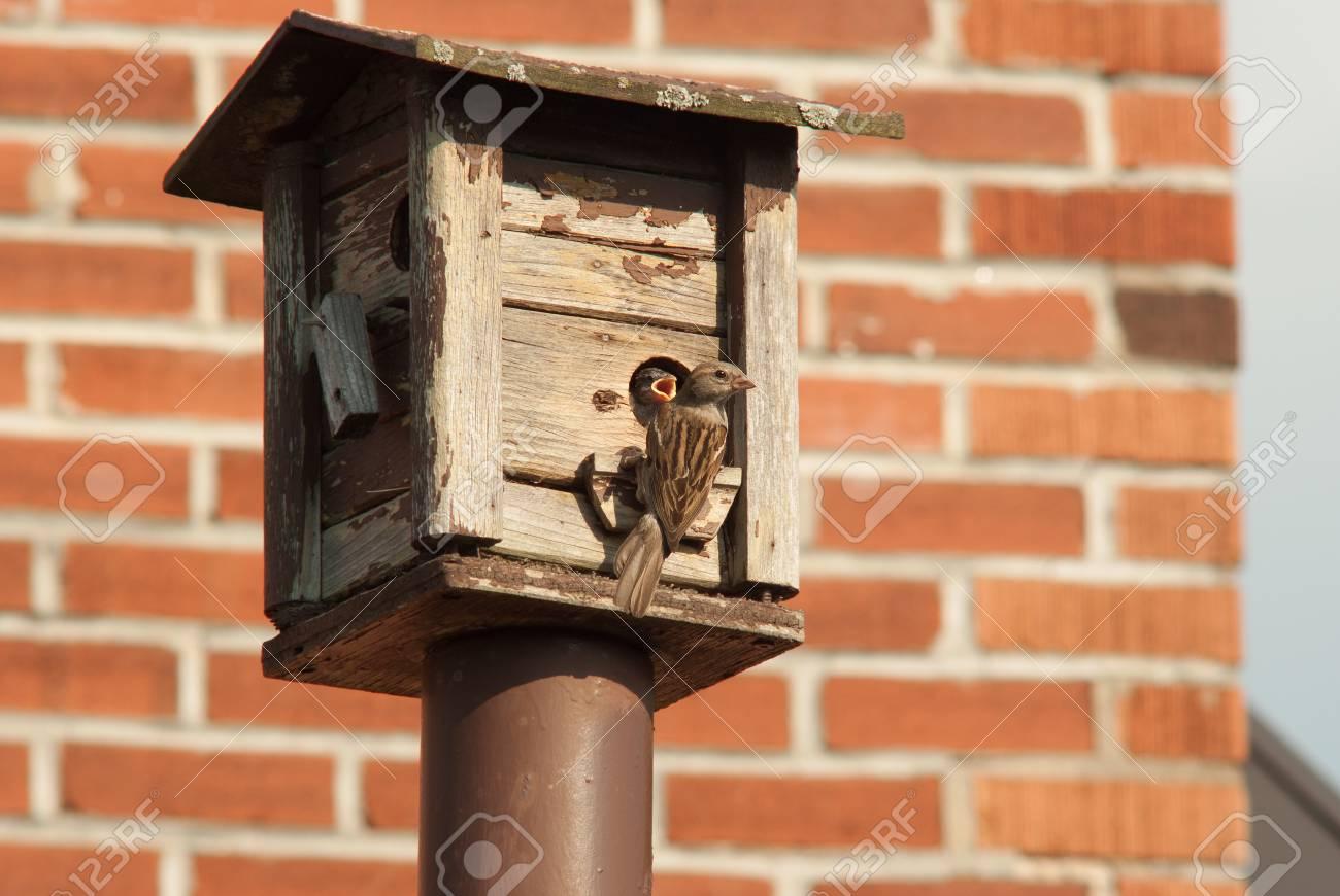 Mère Nourrir Son Bébé À Une Mangeoire Pour Les Oiseaux Contre Une Brique Du  Mur dedans Brique Pour Bebe