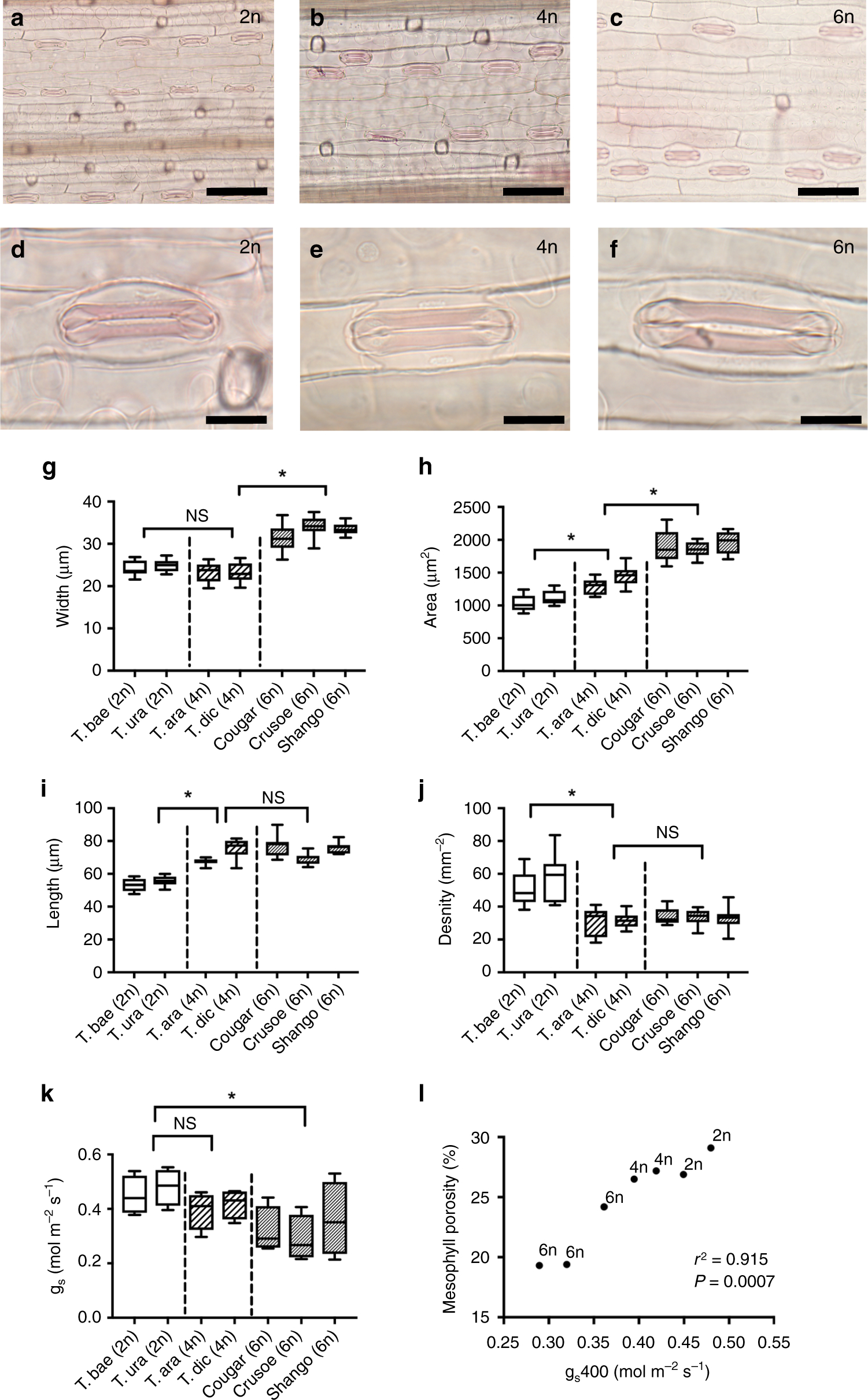 Mesophyll Porosity Is Modulated By The Presence Of à Traits Obliques Ms