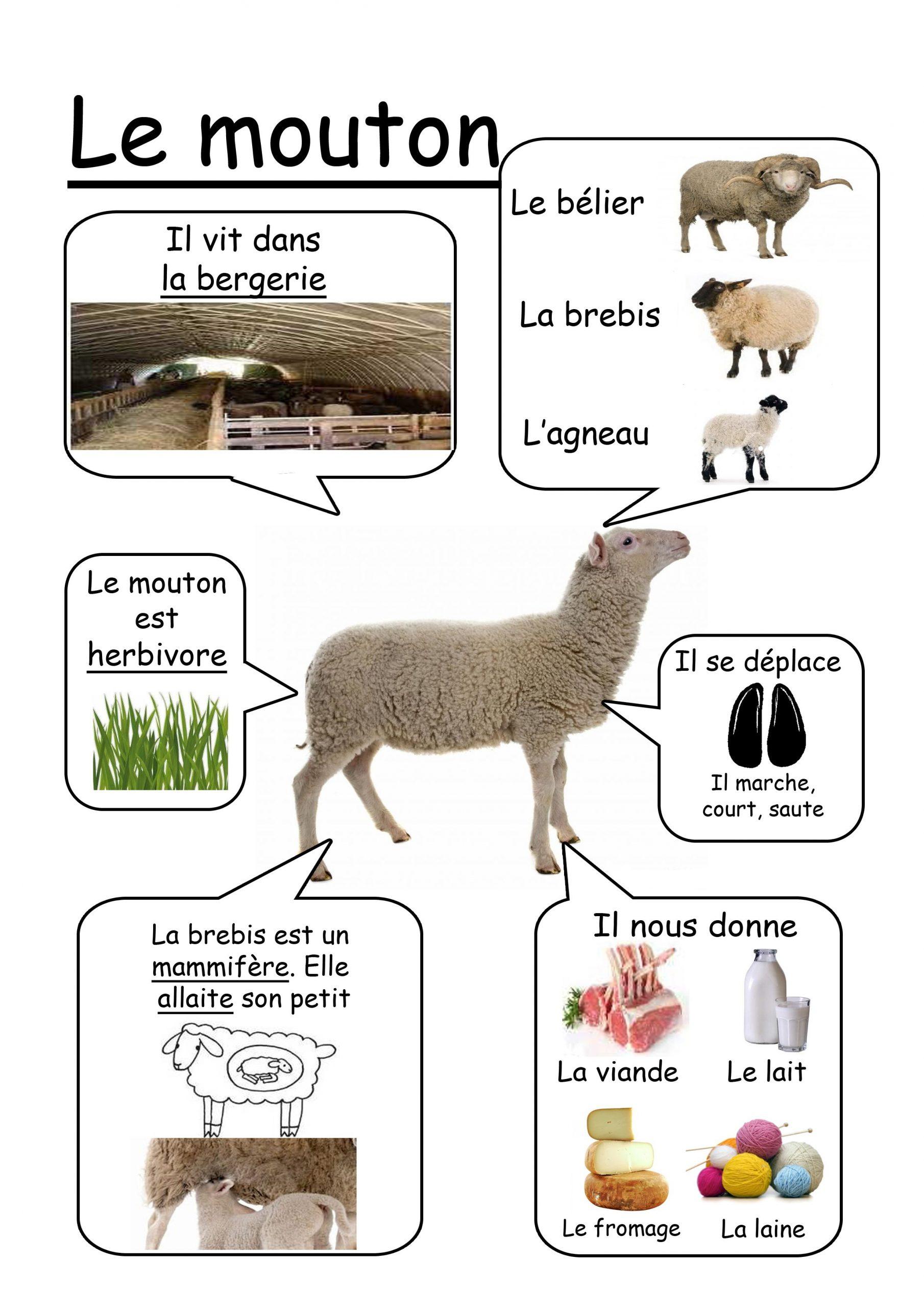 Mouton - Animaux De La Ferme   Animaux De La Ferme serapportantà Imagier Animaux De La Ferme