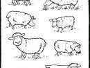 Moutons - Kiddicoloriage concernant Mouton À Colorier