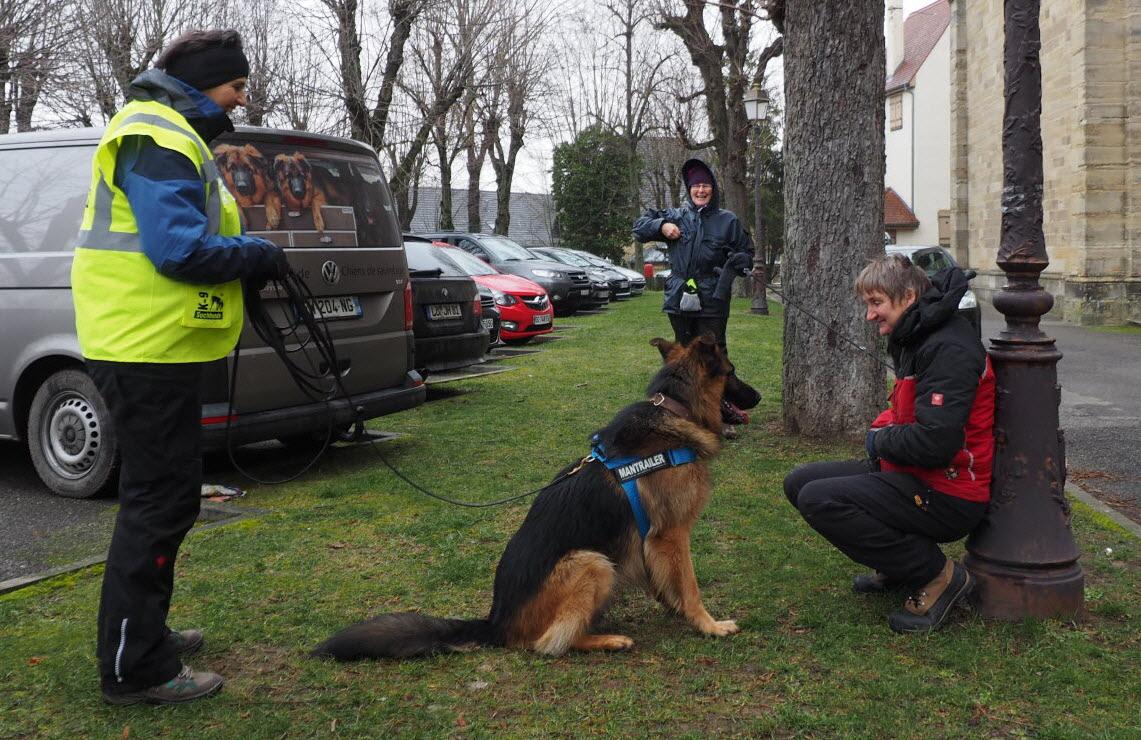 Mulhouse | [Vidéo] Chiens De Recherche Sans Frontières destiné Chien Qui Fait De La Luge