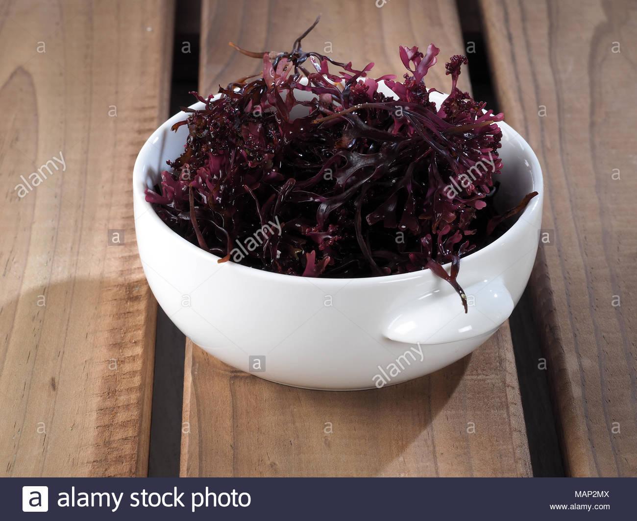 Musgo Estrellado - Faux Mousse - Carrageen Moss Nom Binomial pour Nom Legume
