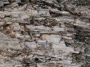 Natural Intempéries Gris Taupe Brown Cut Souche D'arbre Texture, Grand  Horizontal Détaillée Blessés Endommagé Vandalized Gris Lumber Wood  Background concernant Arbre A Taupe