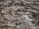 Natural Intempéries Gris Taupe Brown Cut Souche D'arbre Texture, Grand  Horizontal Détaillée Blessés Endommagé Vandalized Gris Lumber Wood  Background dedans Arbre A Taupe