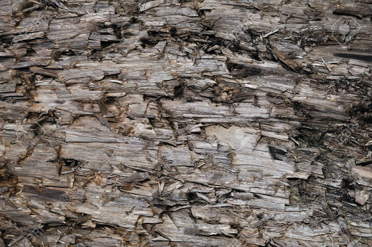 Natural Intempéries Gris Taupe Brown Cut Souche D'arbre Texture, Grand  Horizontal Détaillée Blessés Endommagé Vandalized Gris Lumber Wood  Background dedans Arbre A Taupe