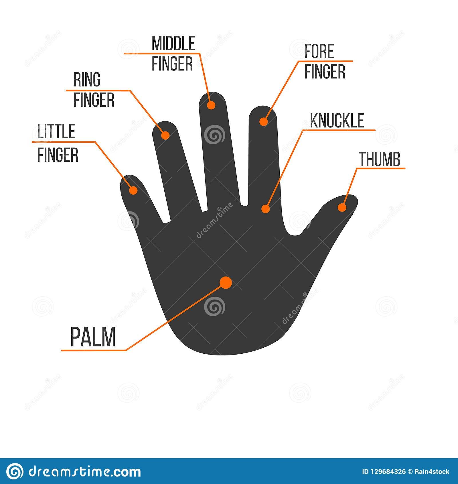 Noms De Doigts De Main Humaine De Paume, Illustration D à Nom Des Doigts De La Main