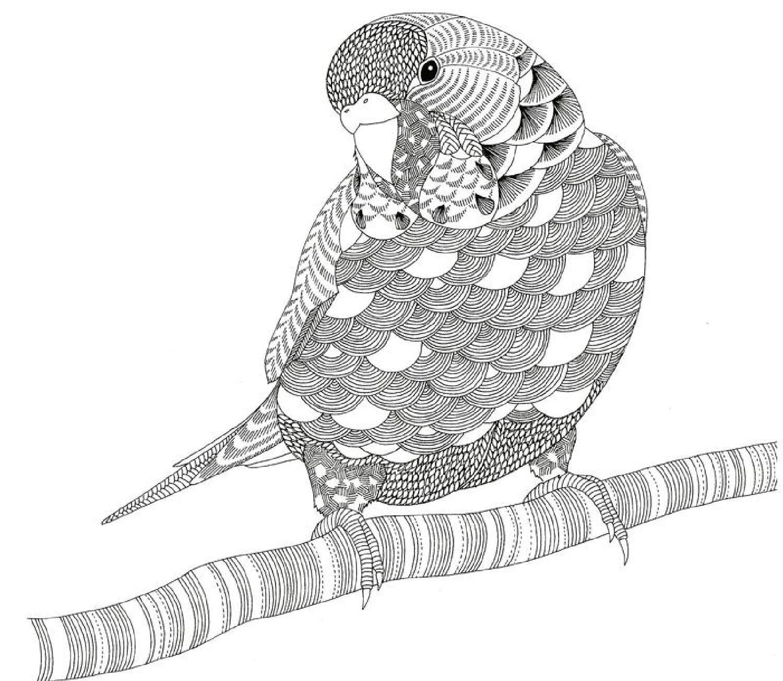 Parrot ~ Millie Marotta | Coloriage Perroquet, Coloriage concernant Perroquet Coloriage A Imprimer