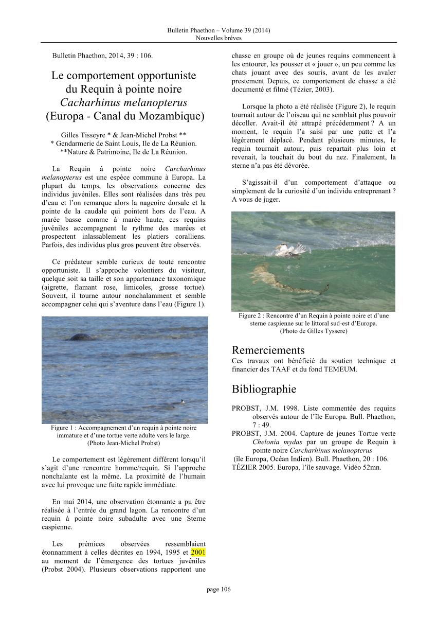 Pdf) Le Comportement Opportuniste Du Requin À Pointe Noire à Requin Souris