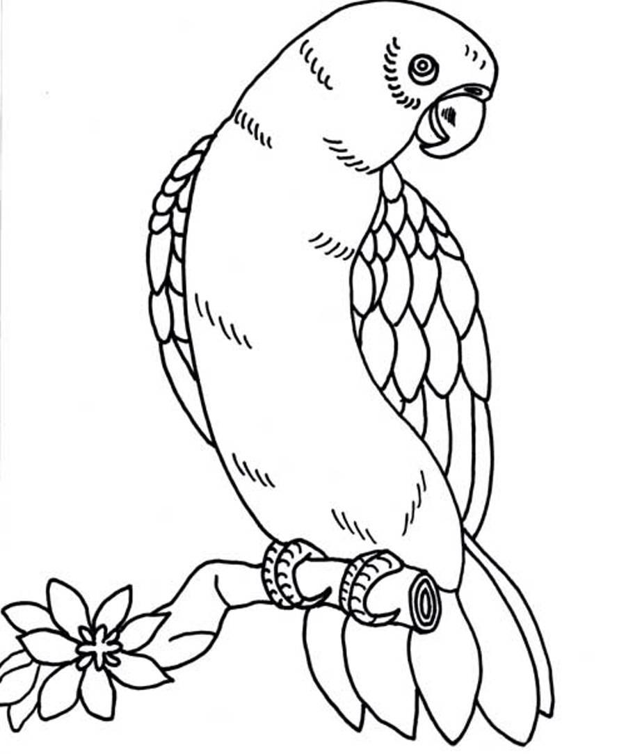Perroquet #109 (Animaux) – Coloriages À Imprimer dedans Perroquet Coloriage A Imprimer