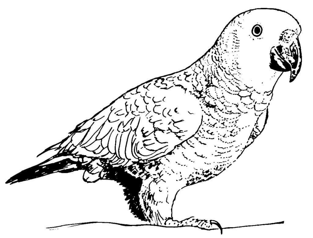 Perroquet #123 (Animaux) – Coloriages À Imprimer concernant Perroquet Coloriage A Imprimer
