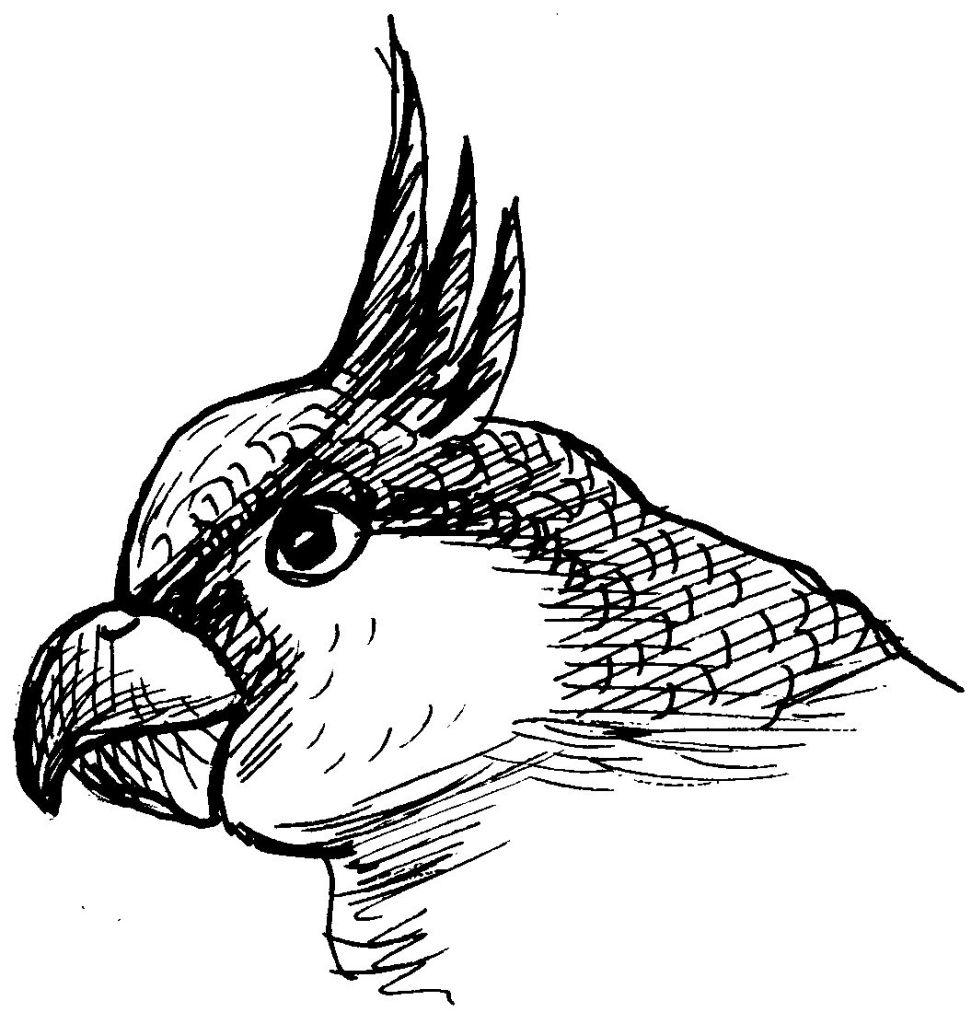 Perroquet #125 (Animaux) – Coloriages À Imprimer dedans Perroquet Coloriage A Imprimer