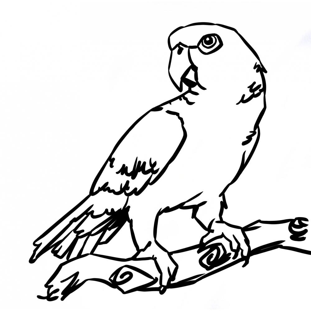 Perroquet #35 (Animaux) – Coloriages À Imprimer serapportantà Perroquet Coloriage A Imprimer