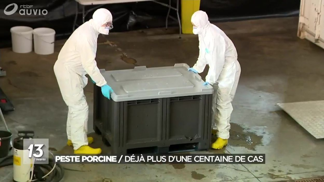 Peste Porcine Africaine : Poursuite Des Analyses - Jt 13H - 19/10/2018 intérieur Cauchemar Poursuite