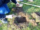 Piège À Taupe : Comment Assainir Son Jardin ? à Arbre A Taupe