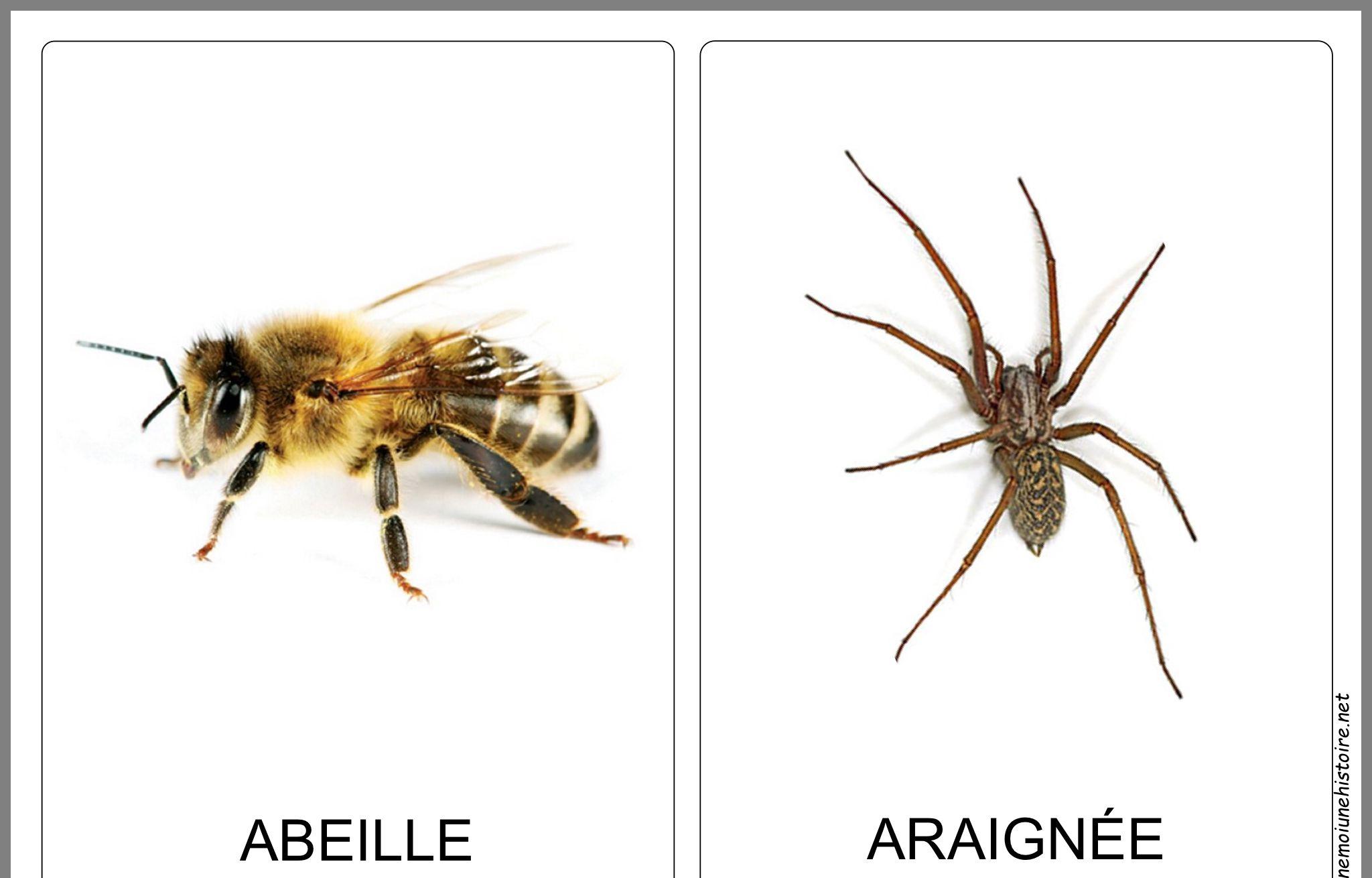 Pin Von Idalina Monbaron Auf Petites Bêtes concernant Imagier Insectes