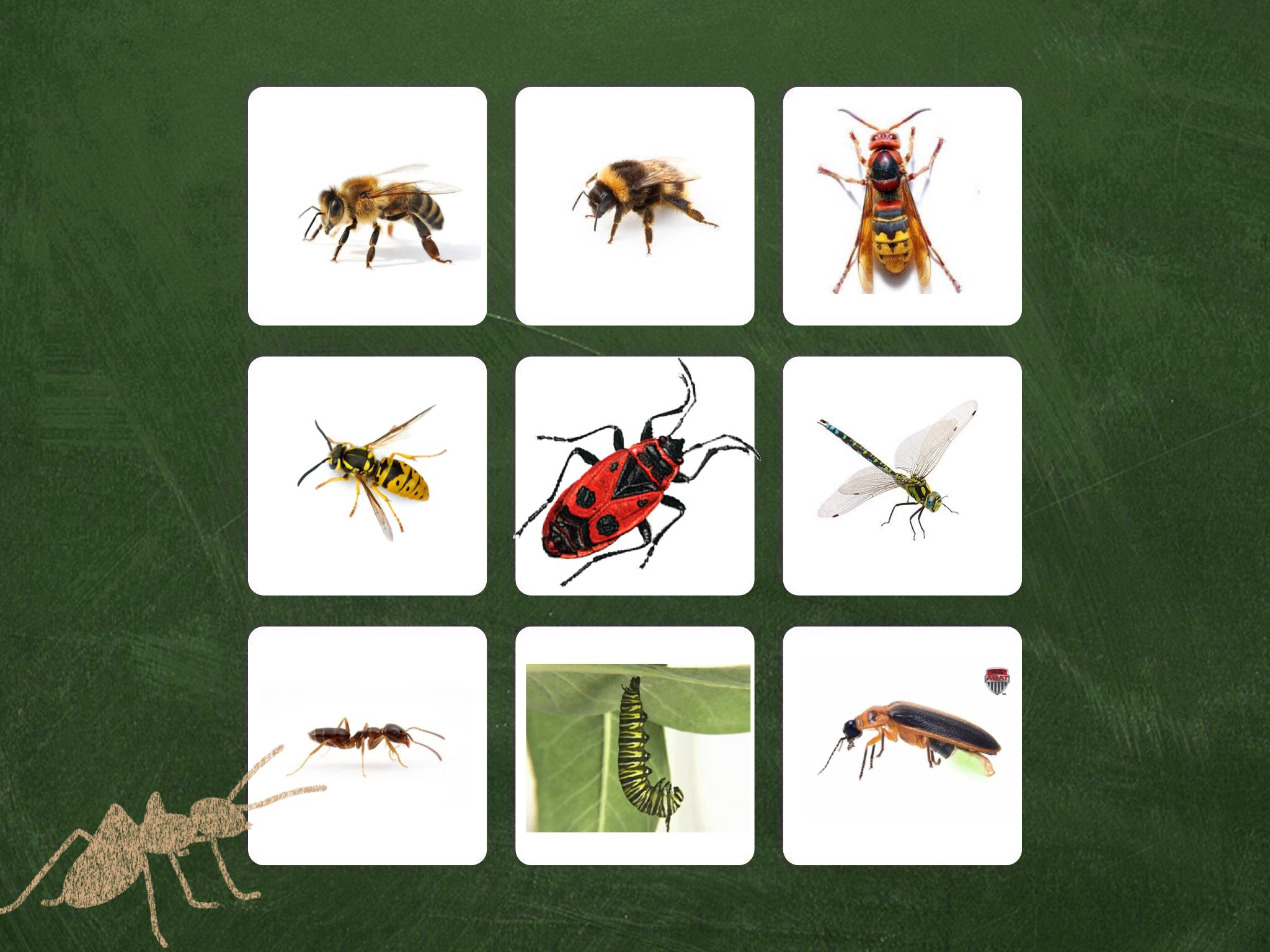 Play Imagier Des Insectes By Judy Lc - On Tinytap tout Imagier Insectes