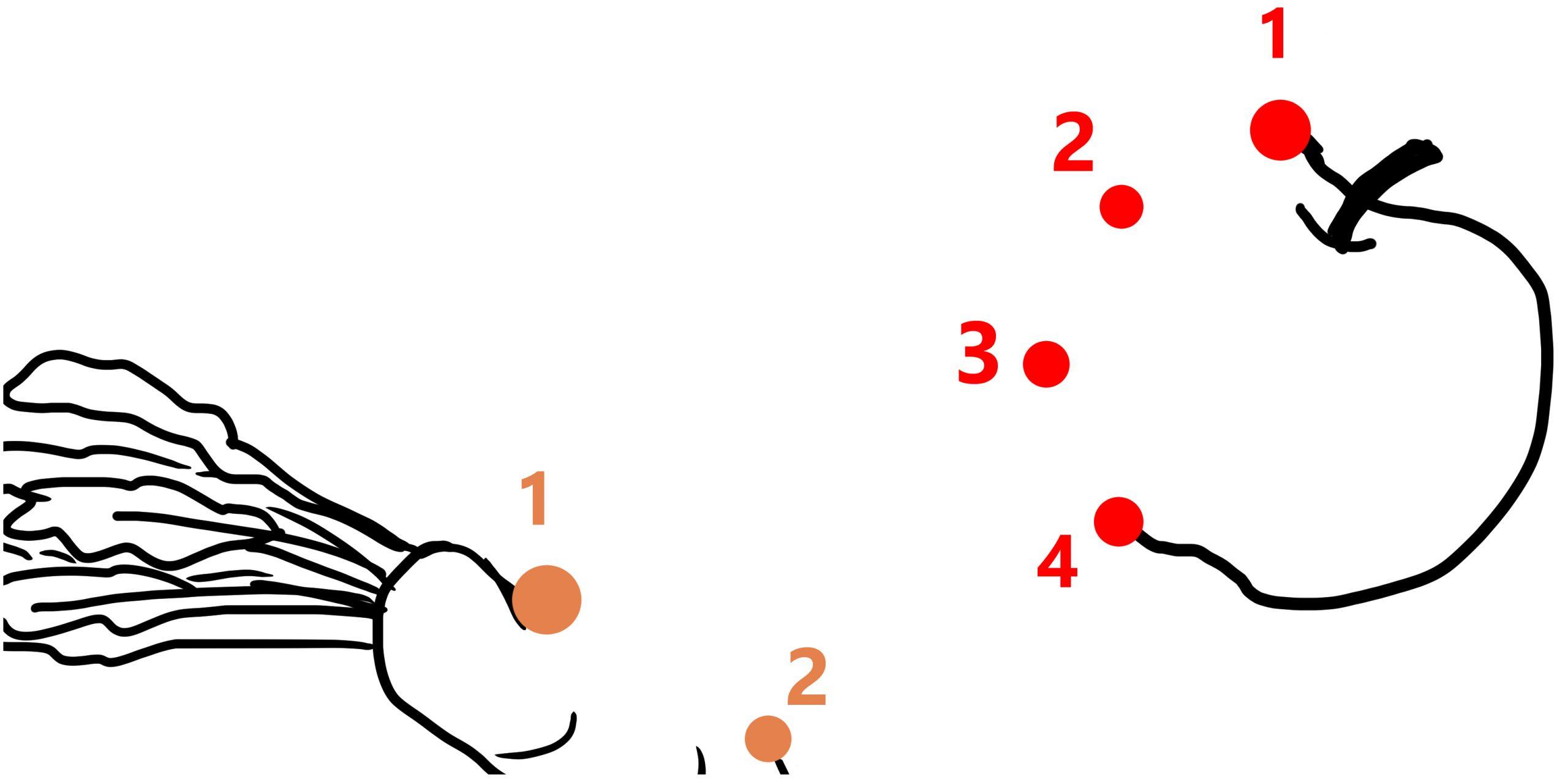 Points À Relier De 1 À 5 (Thème Le Lapin) – Le Plan B concernant Jeu Relier Les Points En Ligne