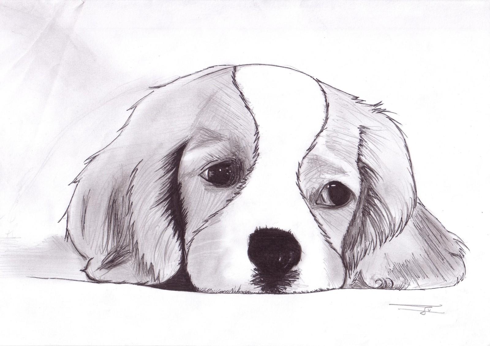 Portrait D'animal - Goupi serapportantà Image De Dessin A Reproduire