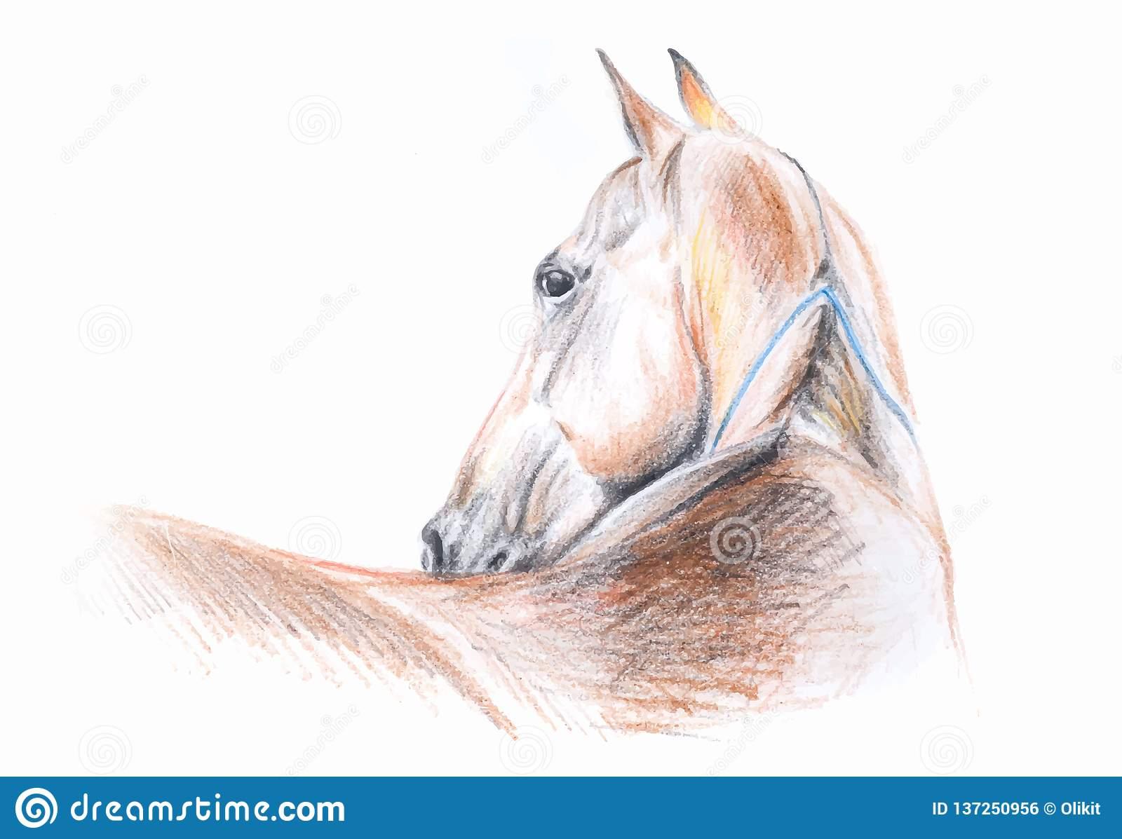 Portrait De Dessin Au Crayon De Couleur De Cheval D'akhal destiné Cheval Dessin Couleur