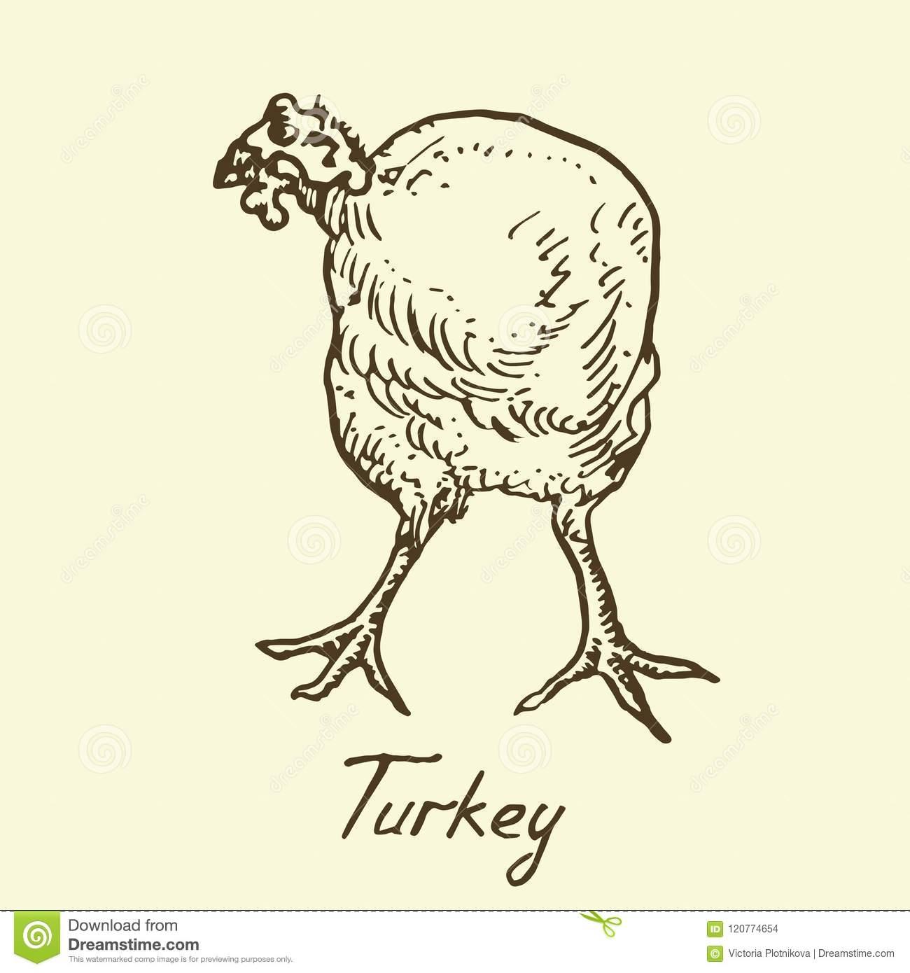Position De La Turquie, Vue De Face, Croquis Dans Le Style D à Bruit Des Animaux De La Ferme