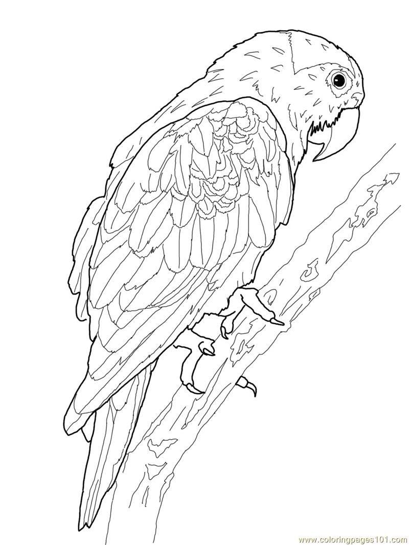 Printable Parrot Coloring Pages | Oiseau Coloriage encequiconcerne Perroquet Coloriage A Imprimer