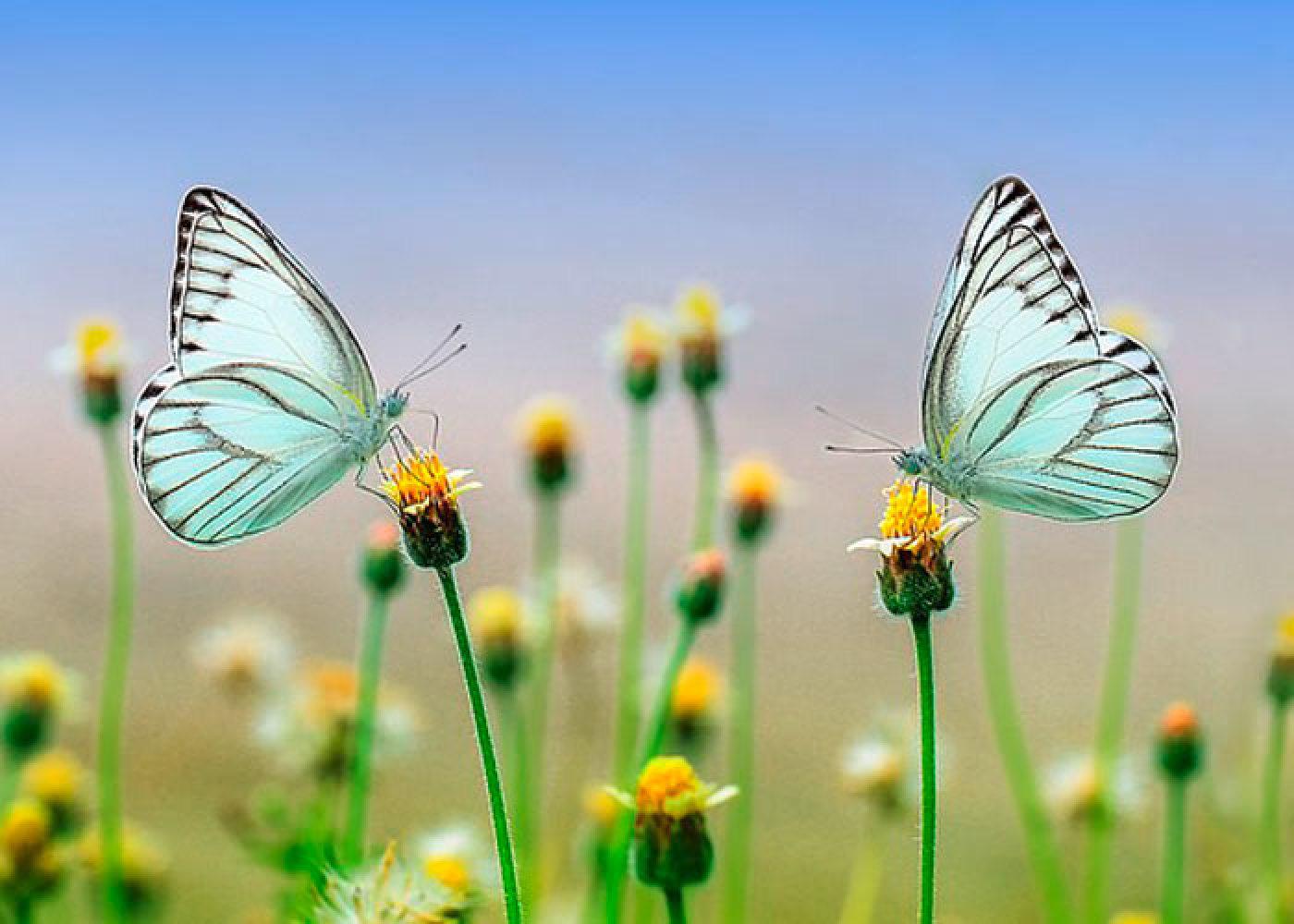 Puzzles Papillons à Jeux Papillon Gratuits Ligne
