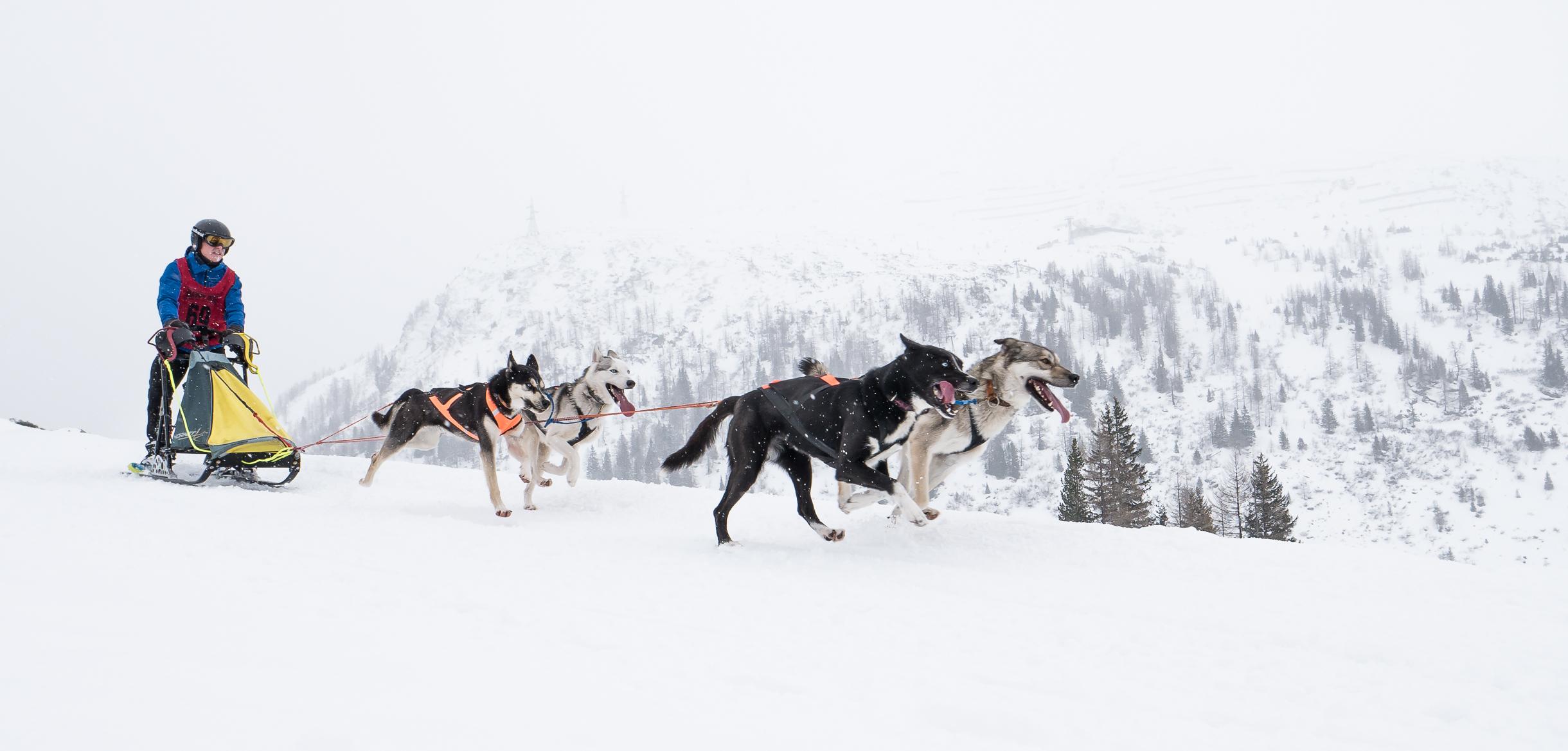 Que Faire En Vacances À La Montagne Quand On N'aime Pas Le Ski ? encequiconcerne Chien Qui Fait De La Luge