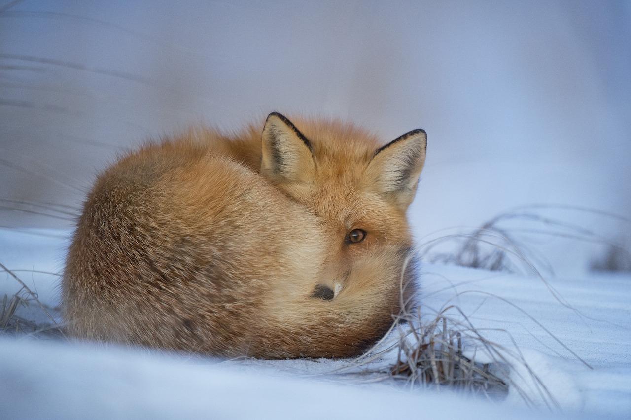 Quelle Est La Différence Entre Hiverner Et Hiberner ? pour Animaux Qui Hivernent