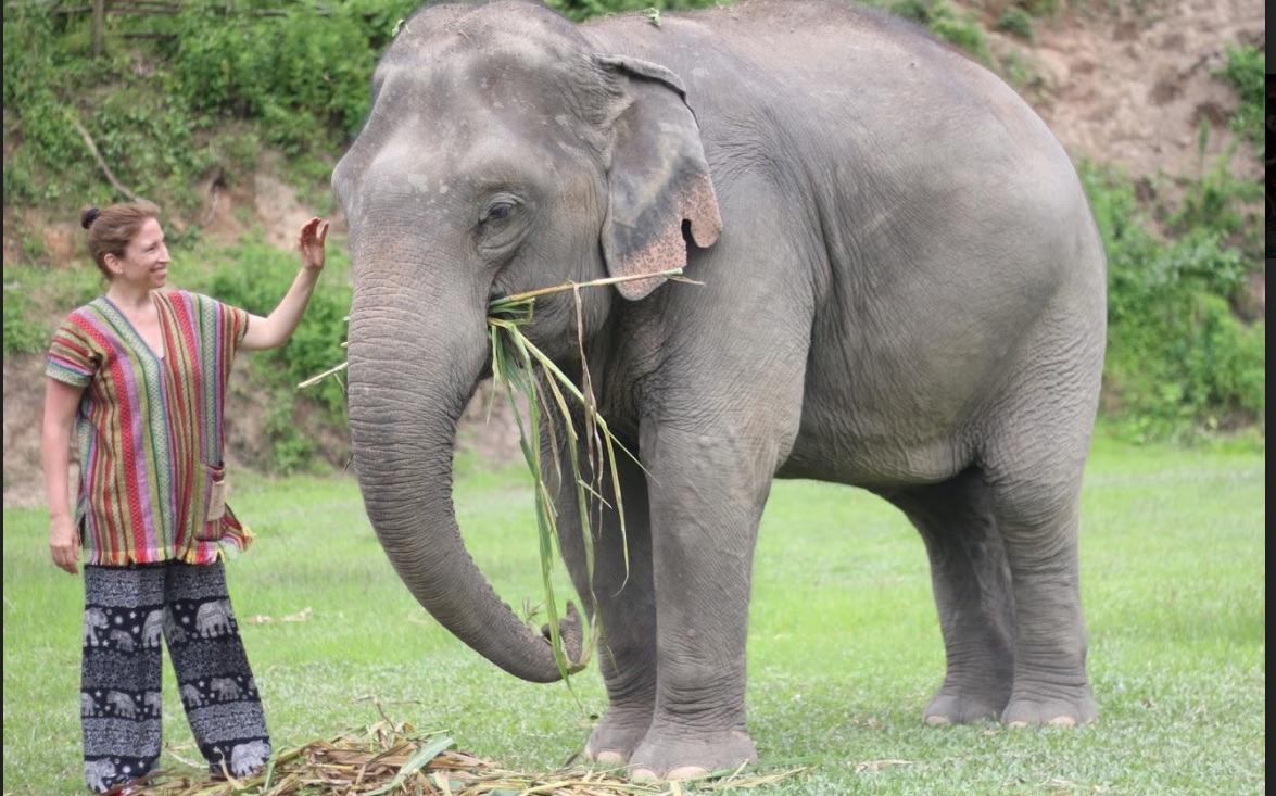 Rencontrer Les Éléphants Éthiquement En Thaïlande pour Barrissement Elephant
