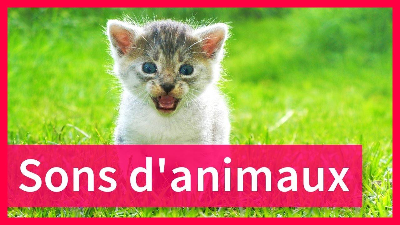 Sons D'animaux Pour Enfants à Bruit Des Animaux De La Ferme
