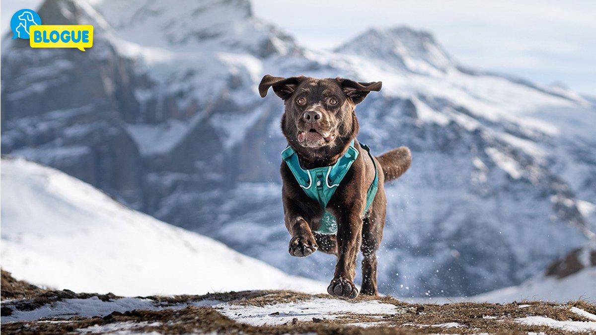 Sport D'hiver Avec Le Chien - Blog Du Qualipet destiné Chien Qui Fait De La Luge
