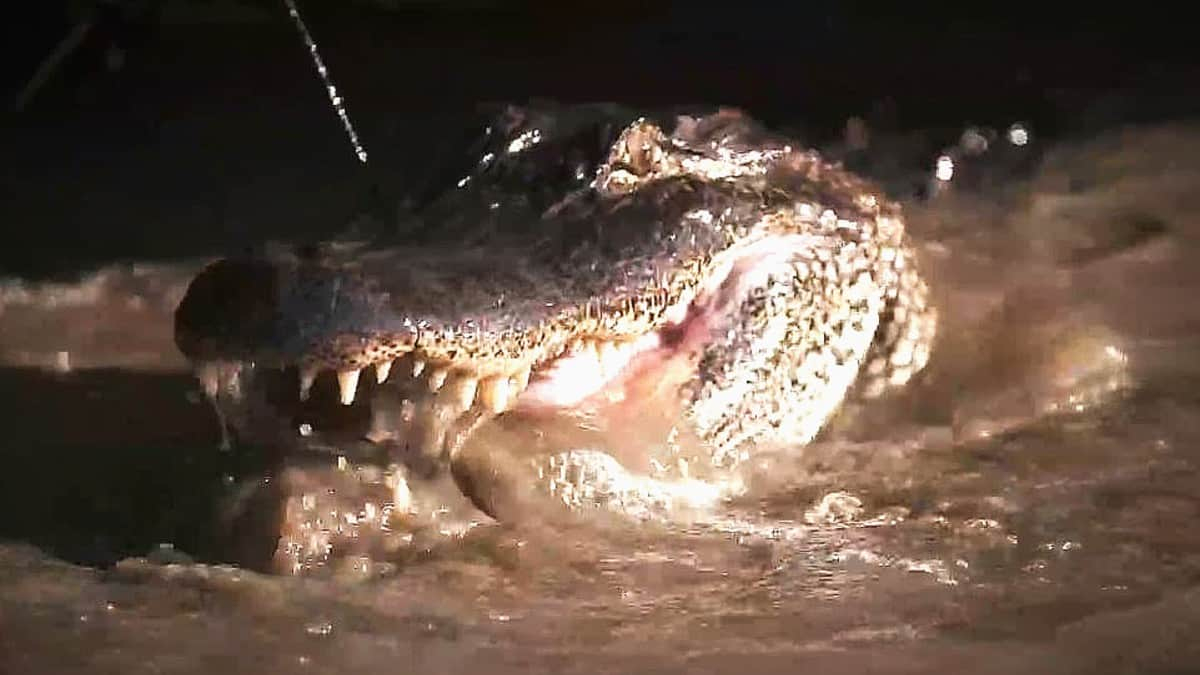 Swamp People Recap: Friday The 13Th, Bagging The Ghost, And concernant Mots Gator