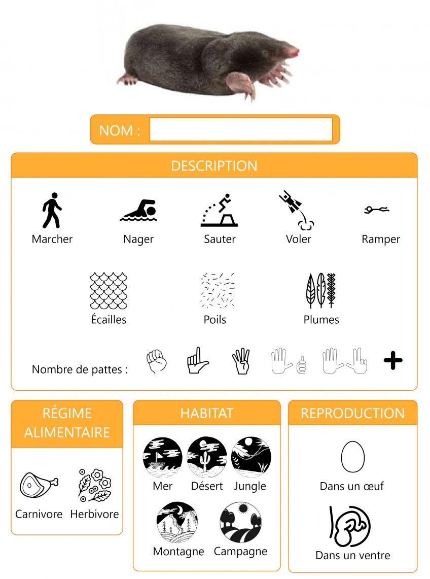 Taupe : Fiche Pédagogique Cycle 1 - Petite Salamandre N°23 concernant La Taupe Chanson