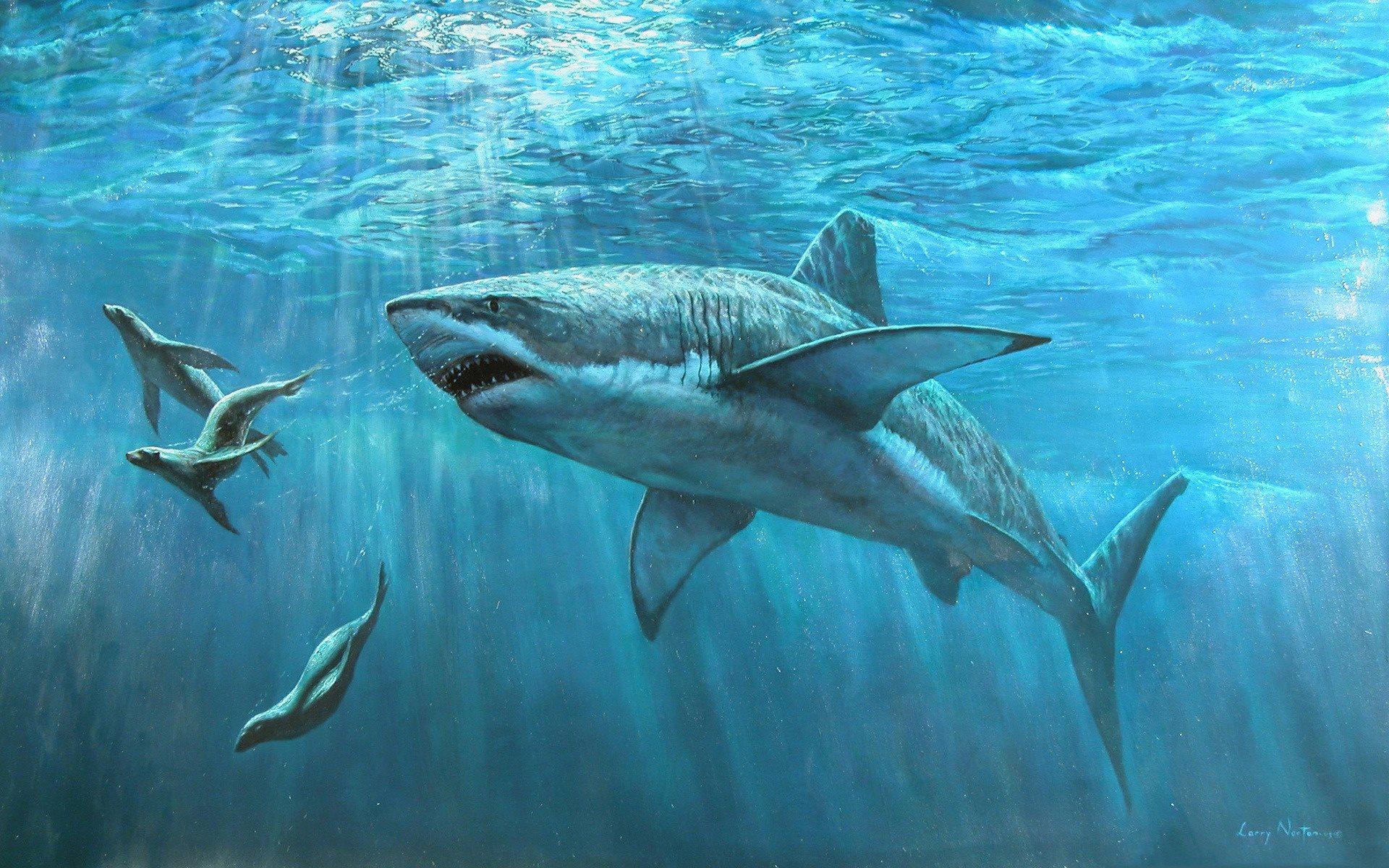 Télécharger Fonds D'écran Sous L'eau, Les Requins Blancs pour Requin Souris