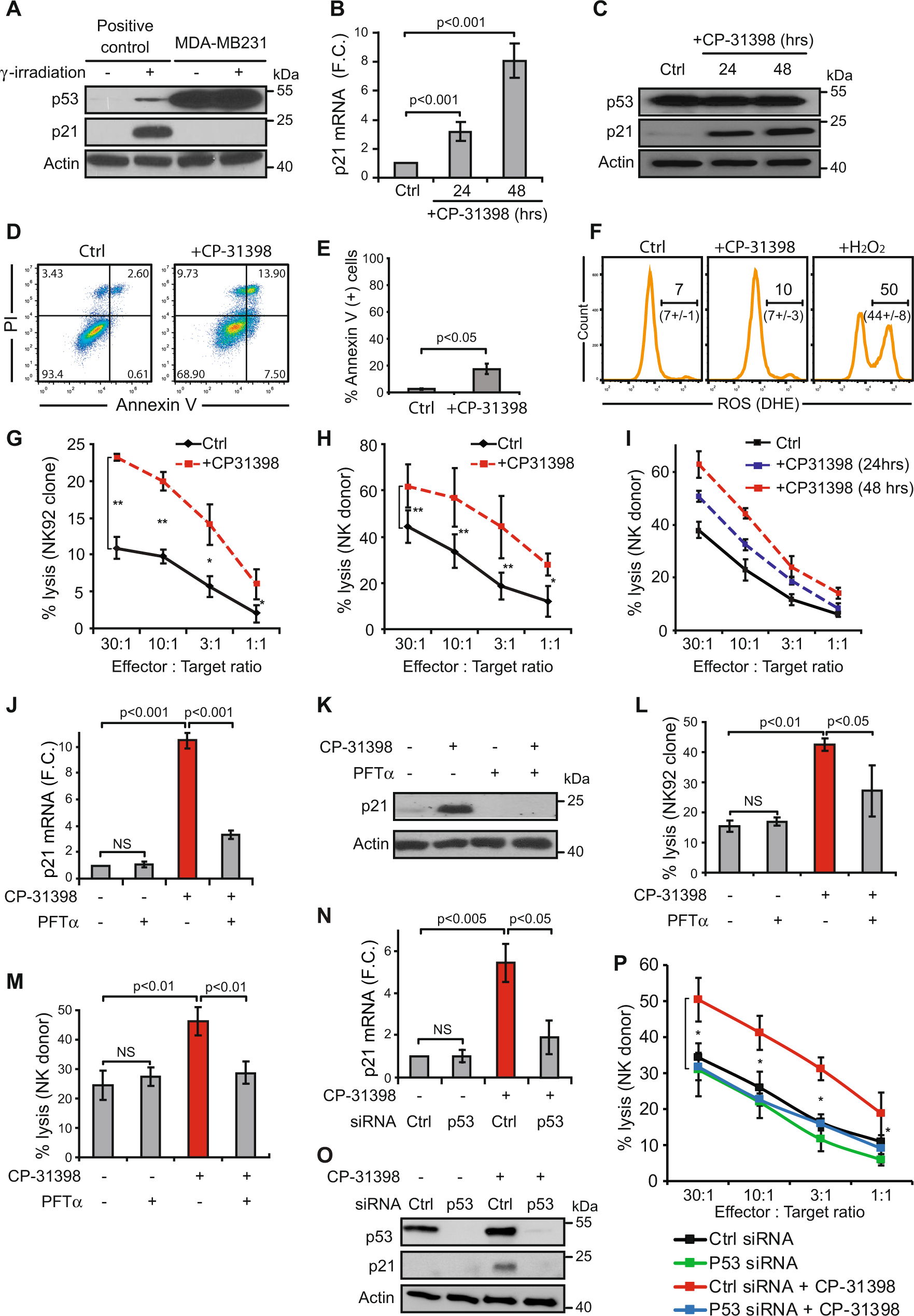 The Pharmalogical Reactivation Of P53 Function Improves avec Reproduction Figure Cp