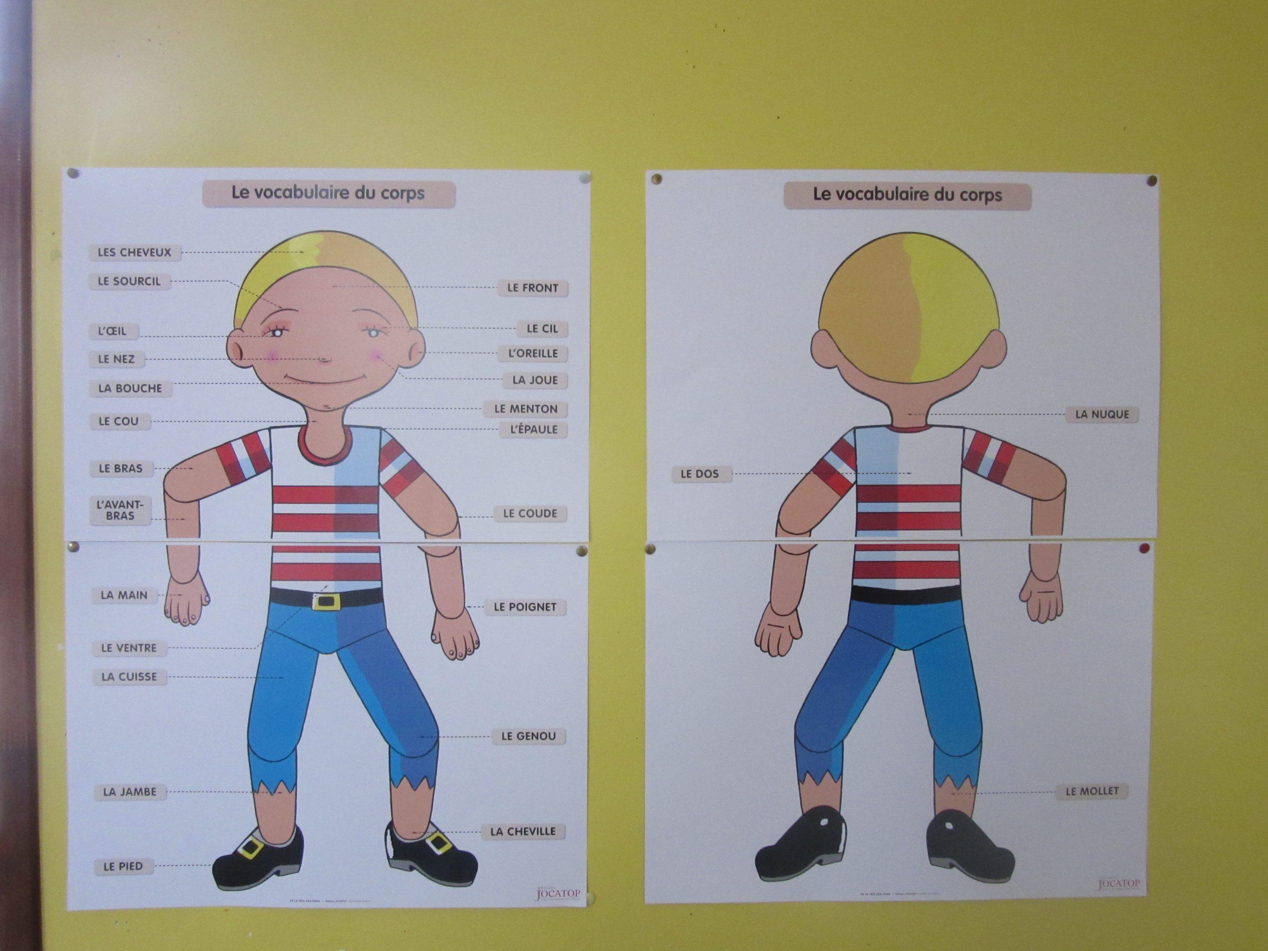 Tps/ps / Schéma Corporel/ Expression Corporelle Avec Pantin pour Fabrication D Un Pantin Articulé