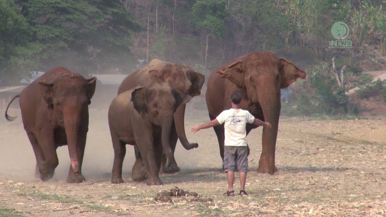 Un Homme Appelle Un Éléphant avec Barrissement Elephant