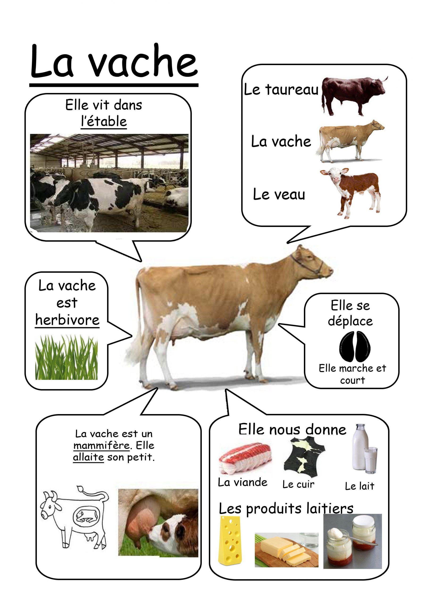 Vache - Animaux De La Ferme   Animaux De La Ferme destiné Imagier Animaux De La Ferme