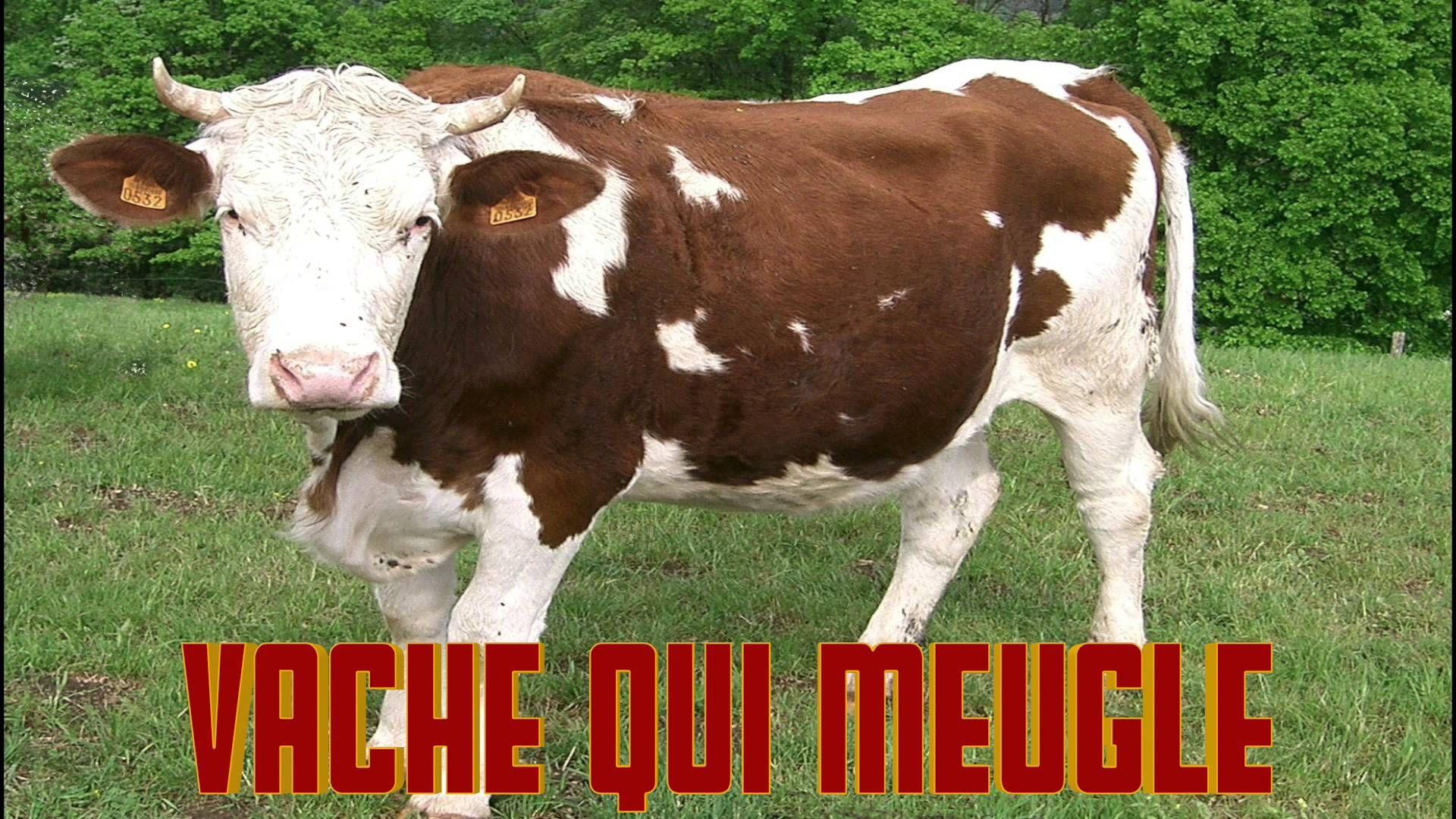 Vache Qui Meugle Le Cri De La Vache Le Bruit Des Animaux Son pour Bruit Des Animaux De La Ferme