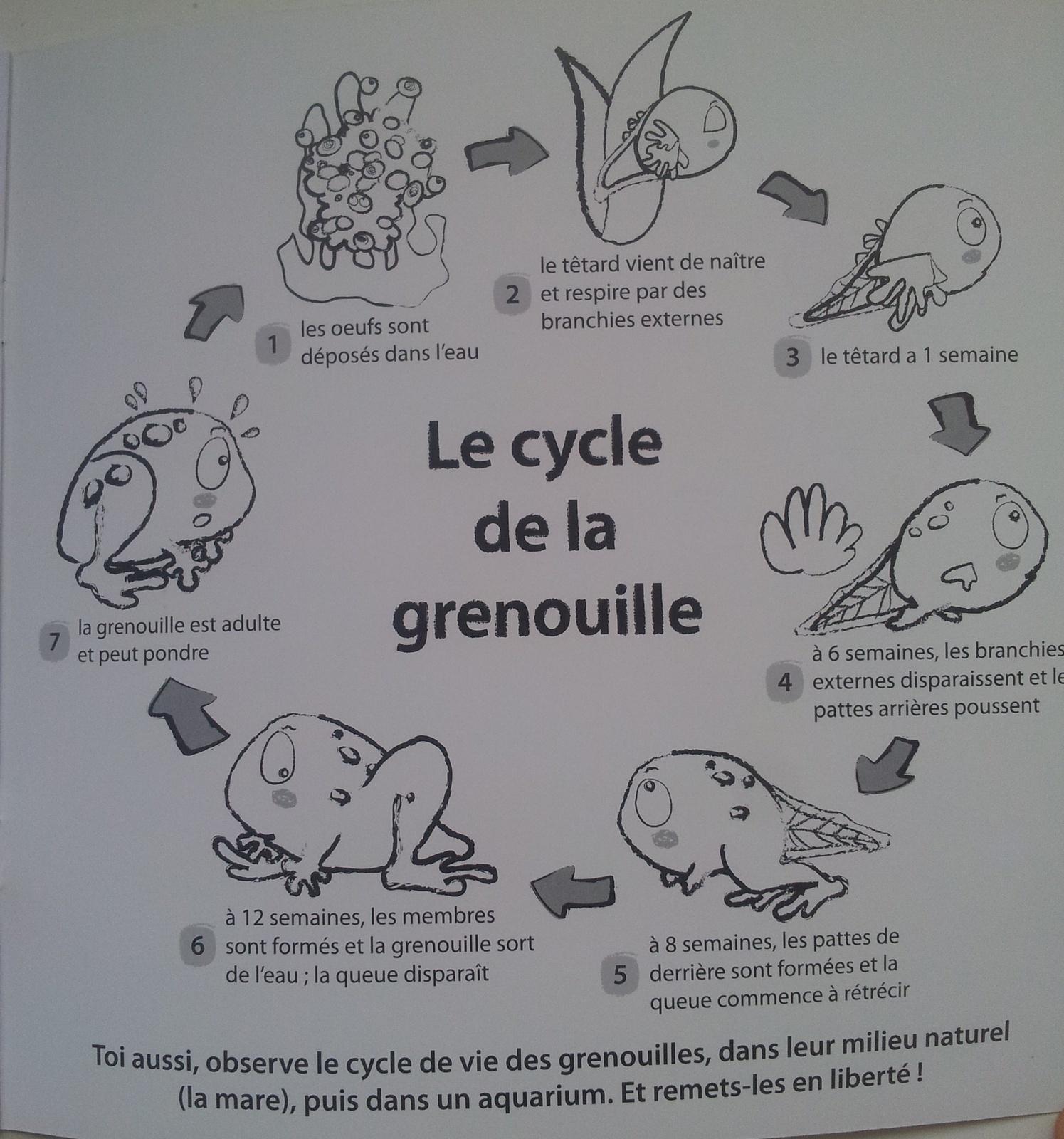 Vies De Grenouilles. (3 Albums Dès 3 Ans) - Vivrelivre concernant Le Cycle De Vie De La Grenouille