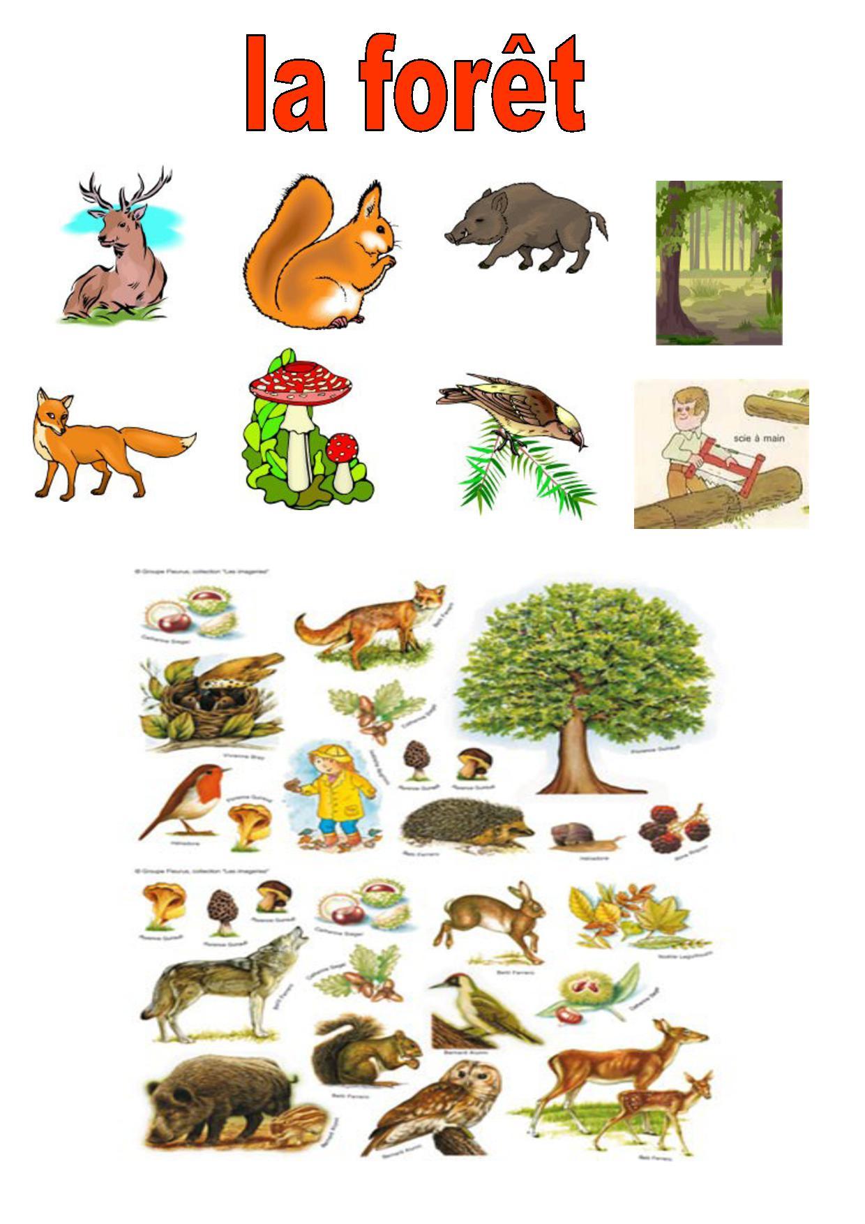 Vocabulaire 2,ce1,ce2, Imagiers, La Forêt,animaux, Végétaux, à Animaux Foret Maternelle