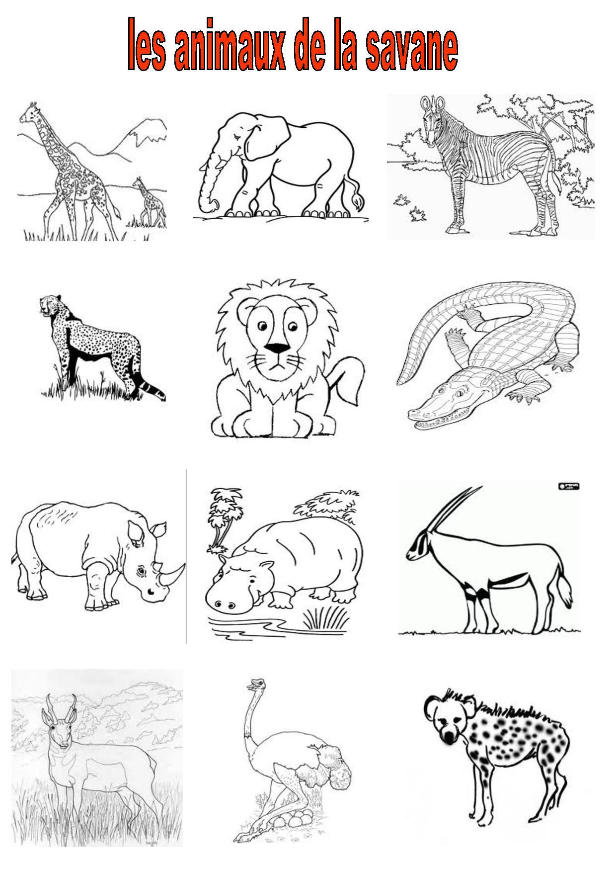 Vocabulaire 2,ce,cm2, Imagiers, Les Animaux De La Savane à Animaux Foret Maternelle